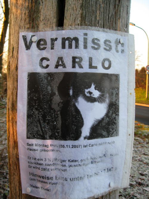 Sign saying that a cat named Carlo has gone missing. Includes a cat photo