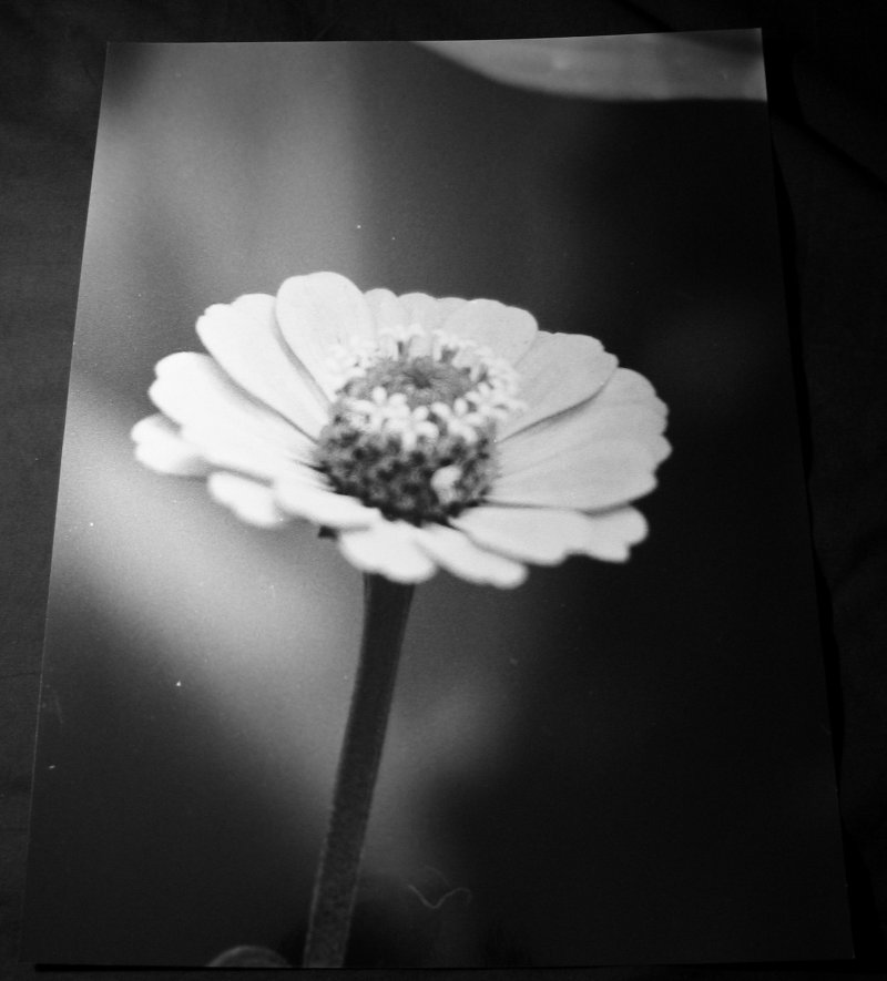 Black and White print of a flower