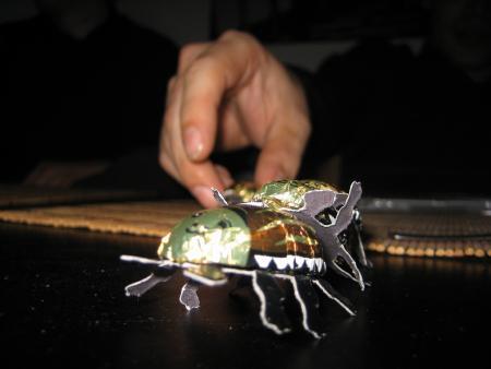 Chocolate Beetle Porn
