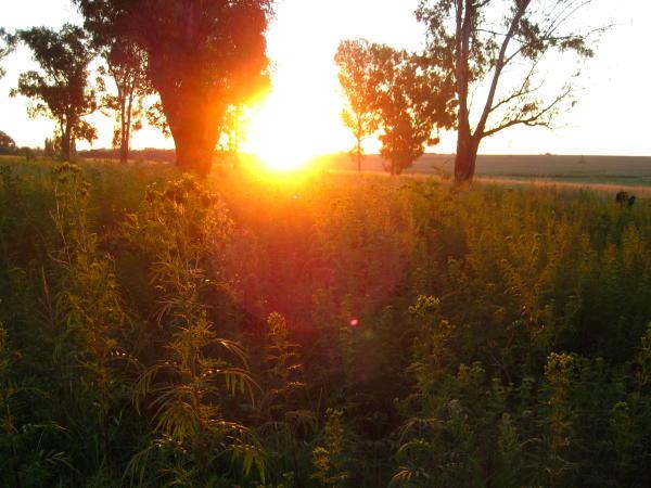Sunset in the veld