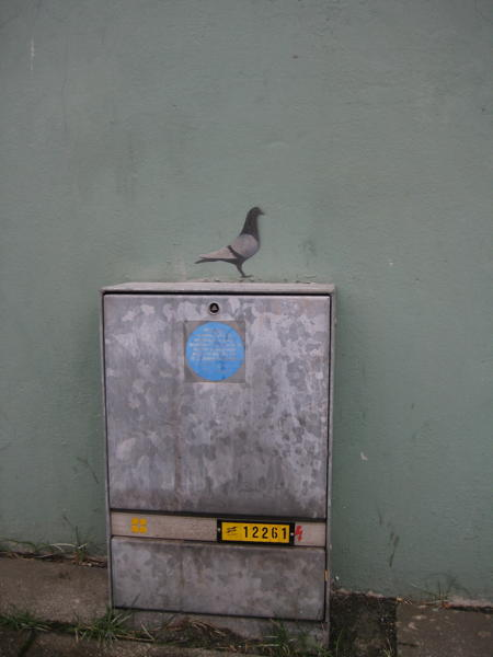 Pigeon sprayed on a wall in Reykjavík.