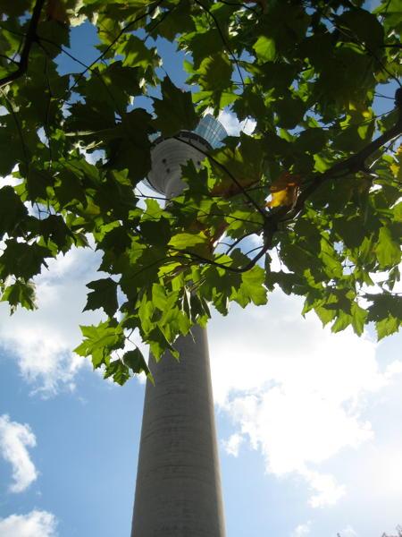 Düsseldorf's Rheinturm hiding behind a tree.