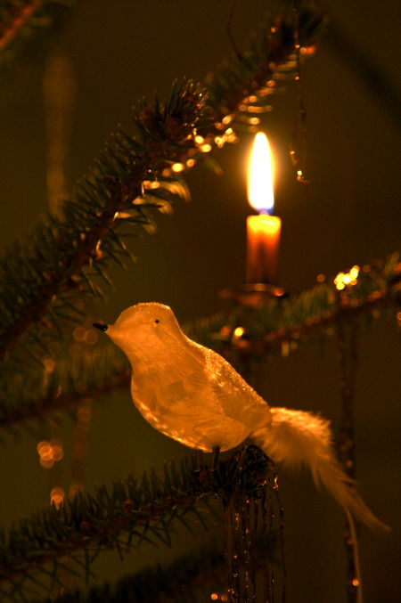 Glass bird on an xmas tree