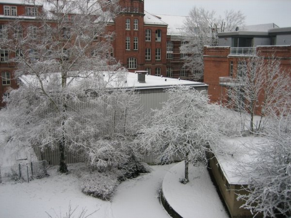 Garden of the math department with snow on the trees.