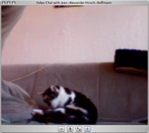 iChat Video window with a cat
