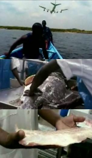 Some images from the film: 1. A plane landing behind a boat with fishermen. 2. A huge fish being fileted. 3. A fillet.